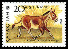 Equus hemionus onager   stamp